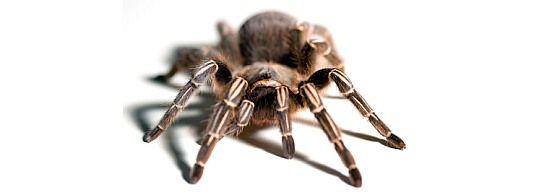 SEO: razgovor s paucima 1. dio